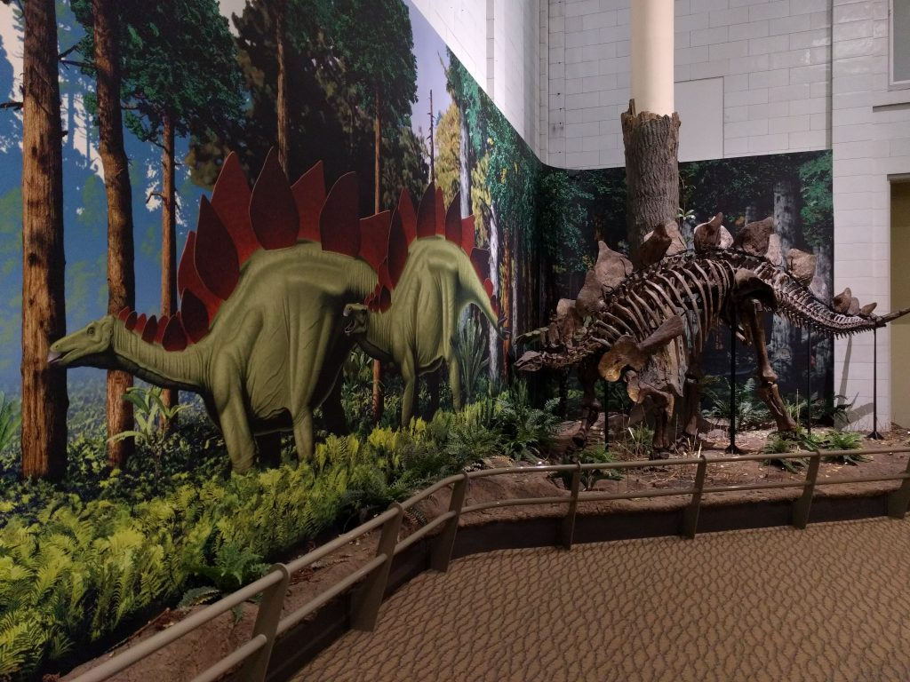 Stegosaurus mounted next to the Walters and Kissinger mural of the Morrison biota at the Carnegie Museum of Natural History.