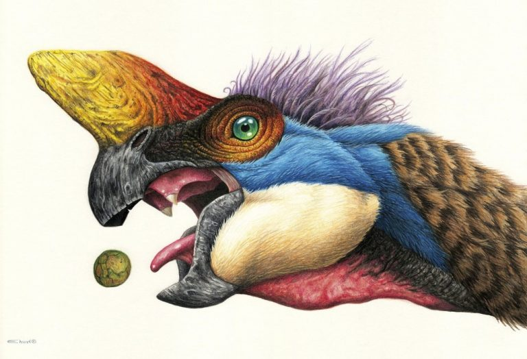 Oviraptor © Esther Van Hulsen. Shared here with the artist's permission.