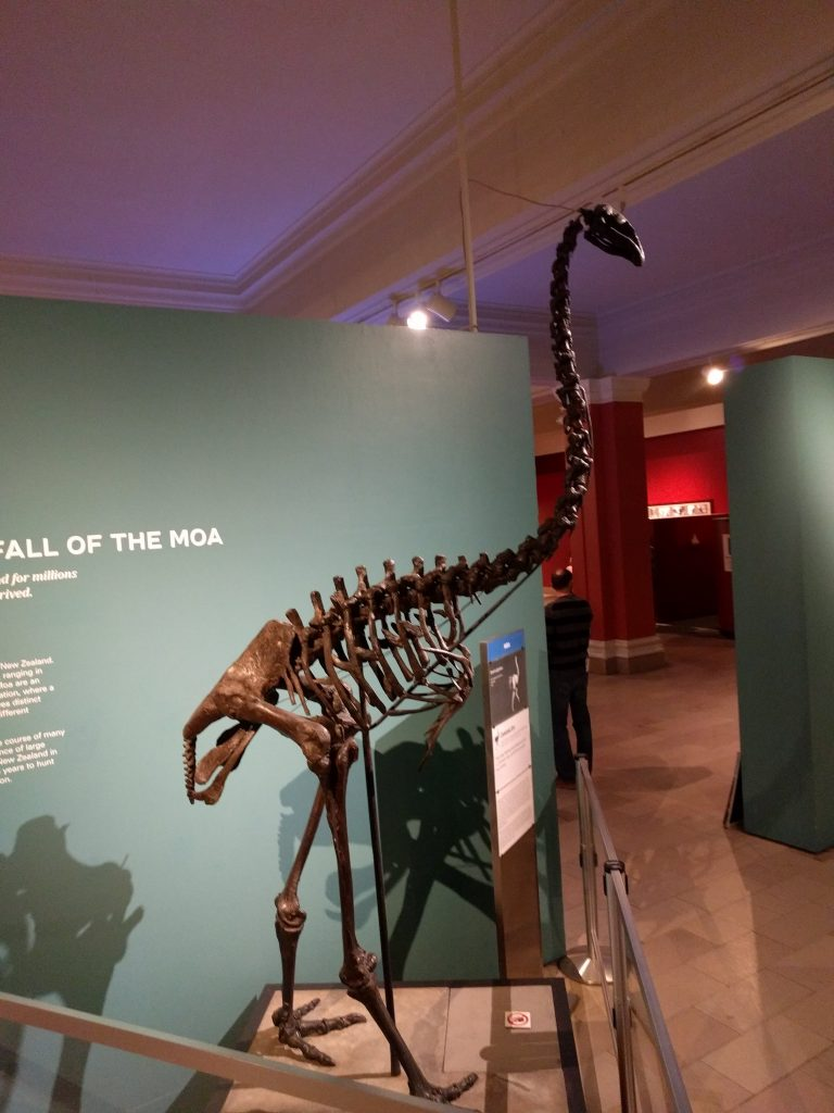Moa mount at the Carnegie Museum of Natural History