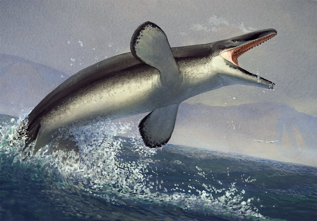 Tylosaurus illustration © Isabelle Forsman, shared here with the artist's permission.