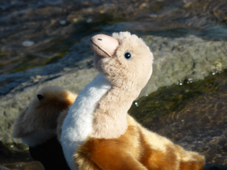 Archaeopteryx plush by Rebecca Groom