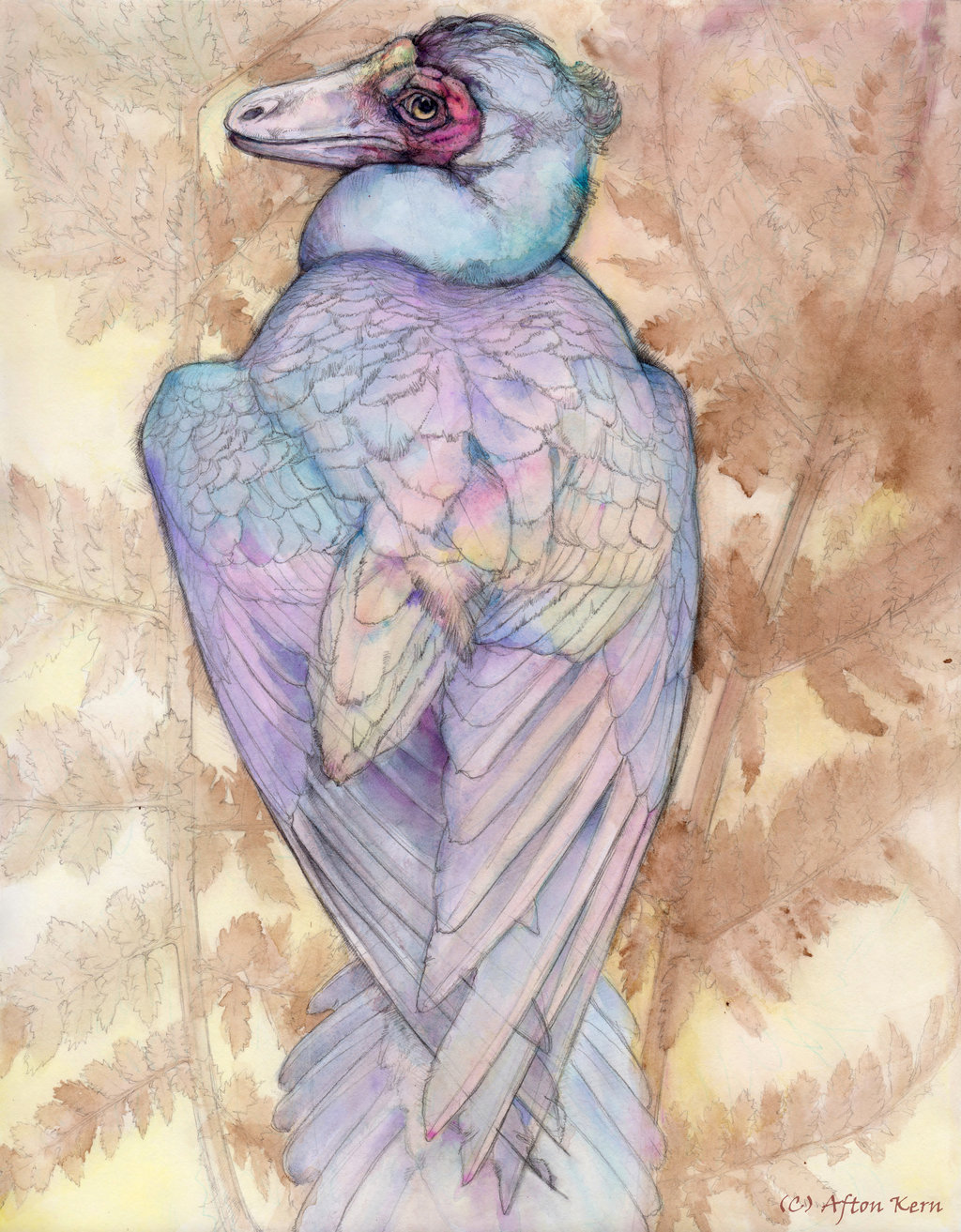 Illustration of Caihong juji by Afton Kern.