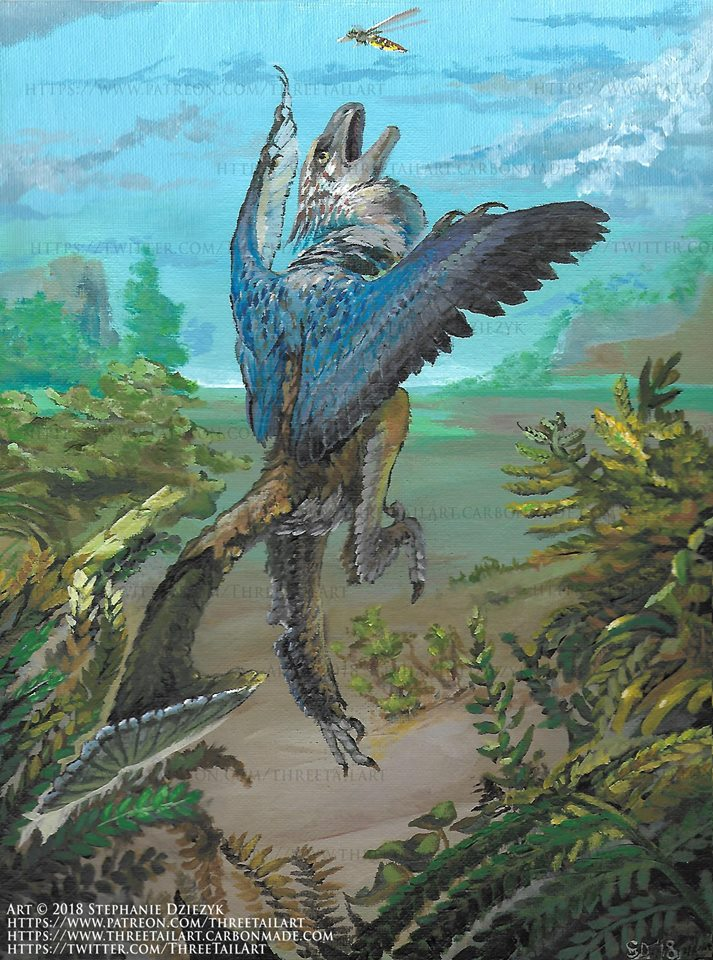 Stephanie Dziezyk's Bambiraptor illustration. Shared here with the artist's permission.
