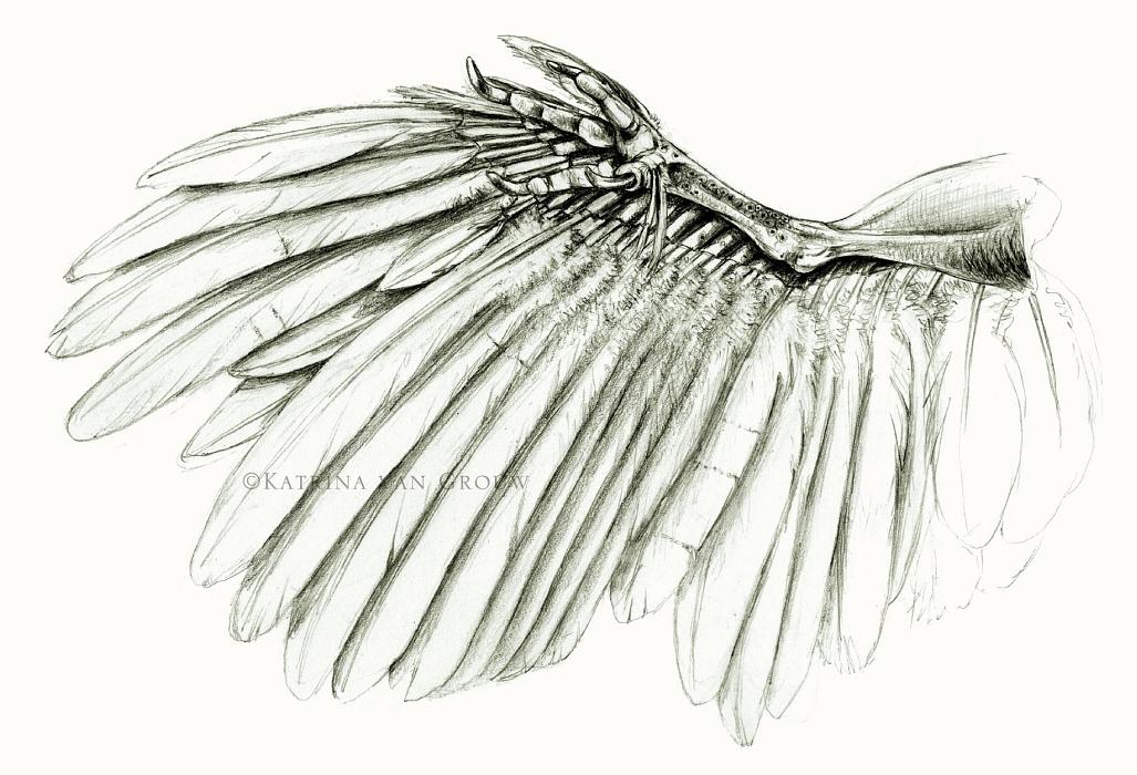 Pigeon leg