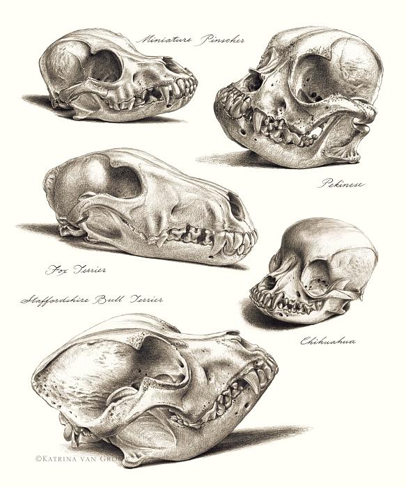 Dog skulls