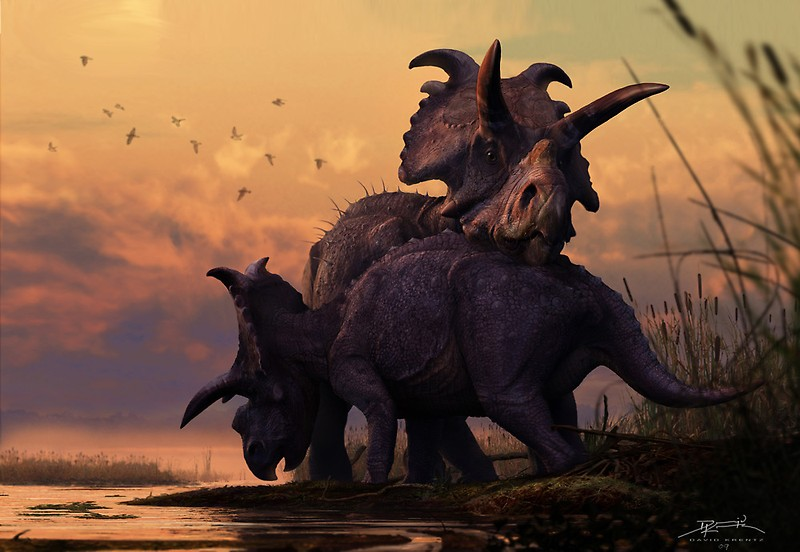 Albertaceratops at Sunset by David Krentz