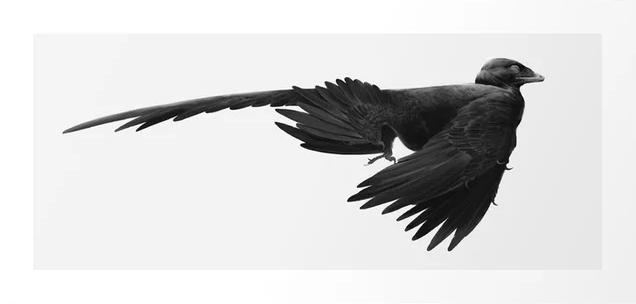 Microraptor print by Studio Eem