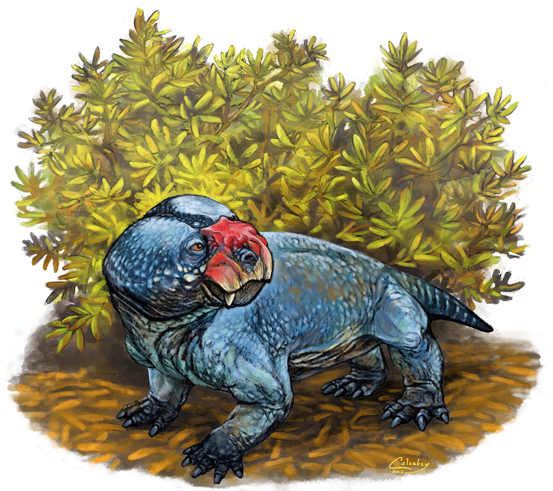 The dicynodont Bulbasaurus, illustrated by Matt Celeskey. Shared here with the artist's permission.