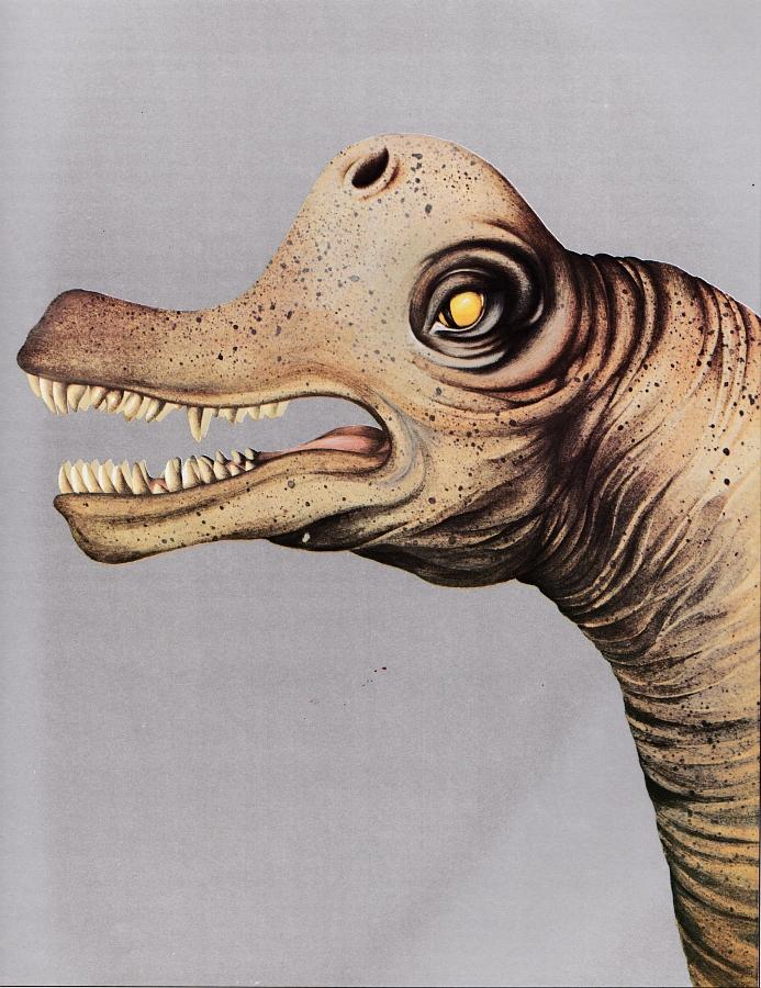 Brachiosaurus by Petula Stone