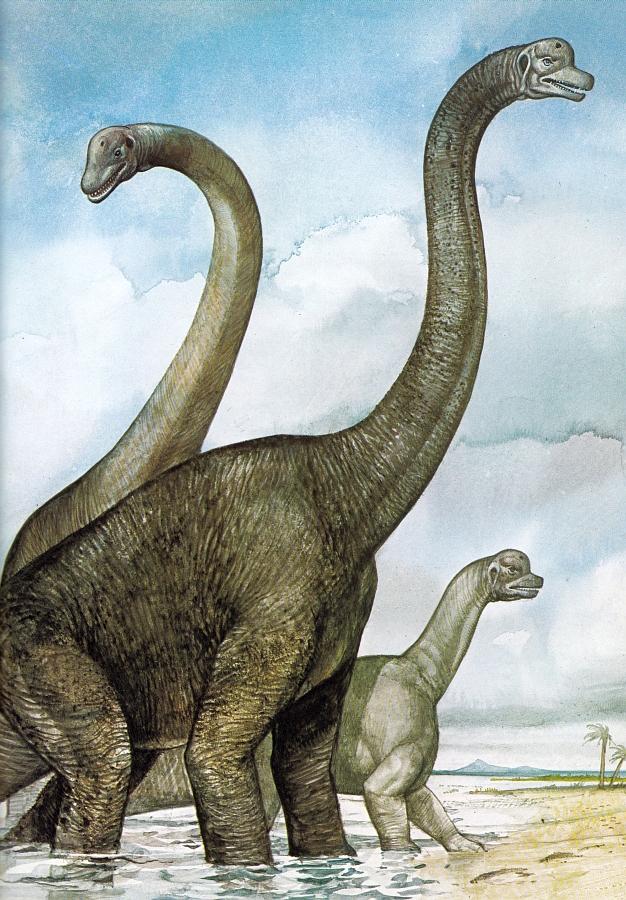 Brachiosaurus by Tony Morris