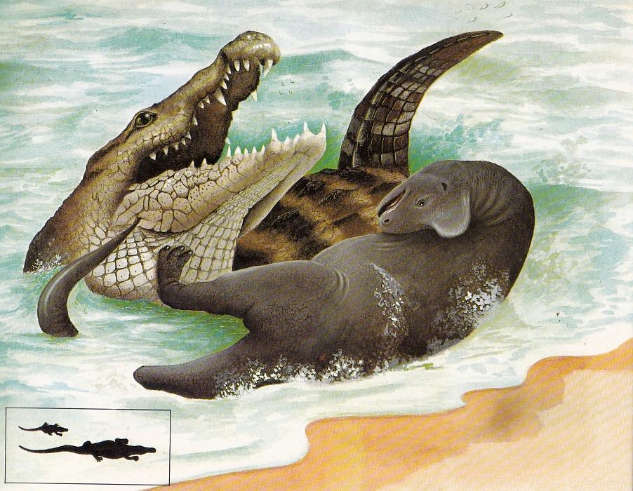 Deinosuchus aka Phobosuchus