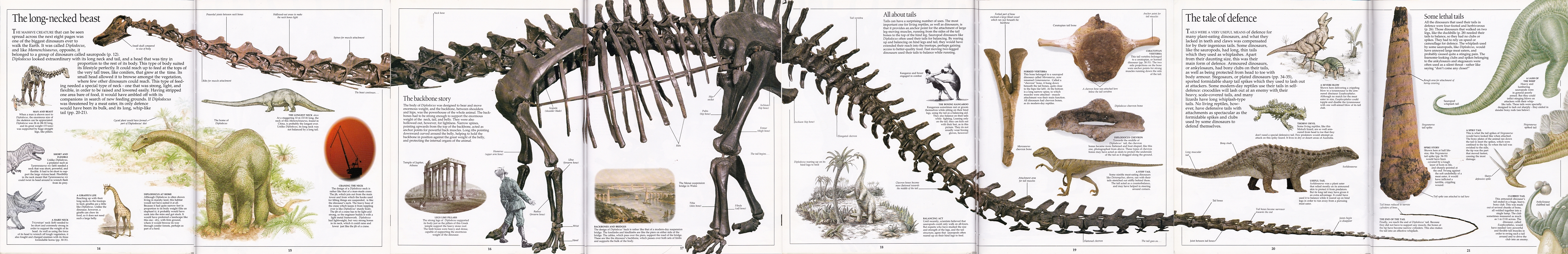 Eyewitness Diplodocus composite