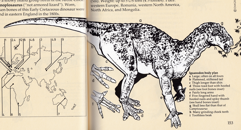 Field Guide Iguanodon