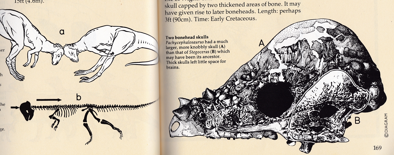 Field Guide pachycephalosaurs