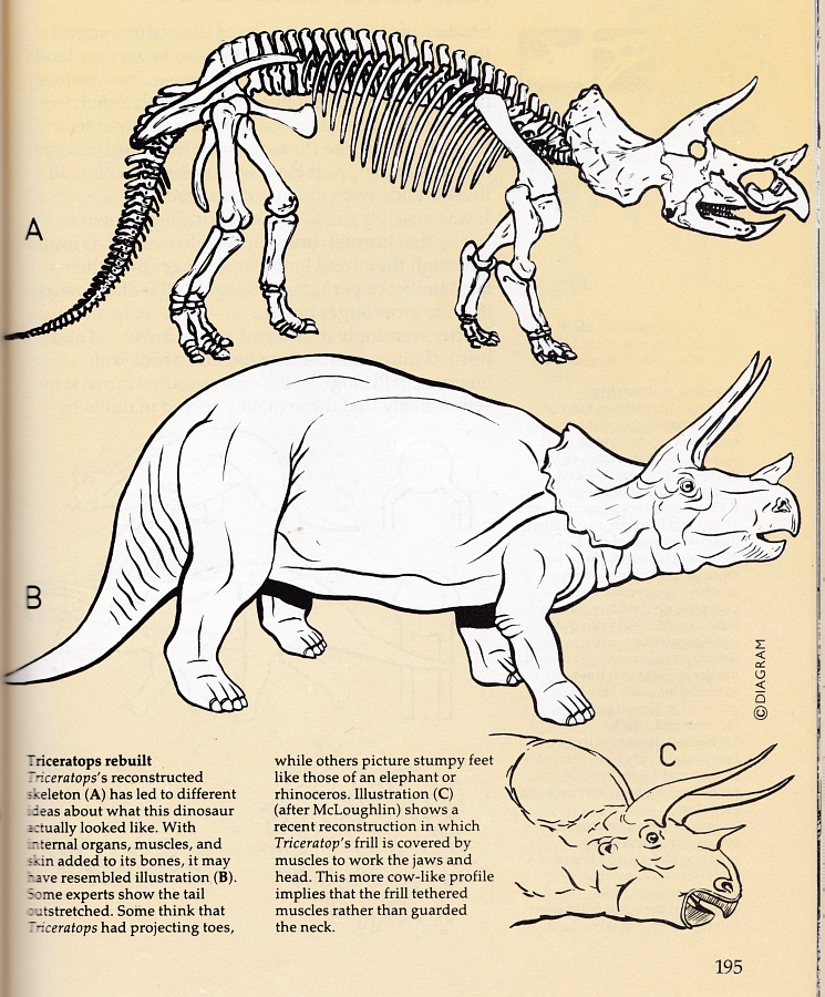 Field Guide Triceratops
