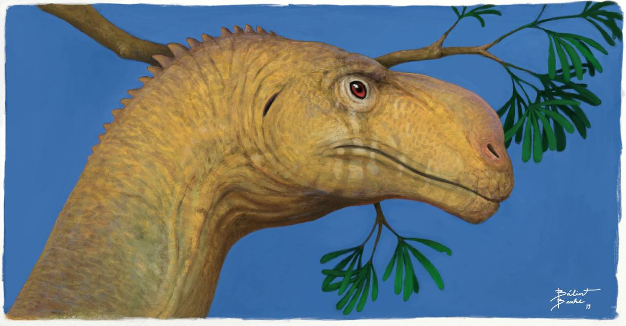 Portrait view of Plateosaurus by Bálint Benke