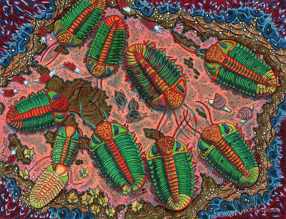 Colorful illustration of a group of Phacops trilobites by artist Nocturnal Sea