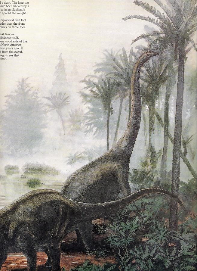 Diplodocus by Steve Kirk