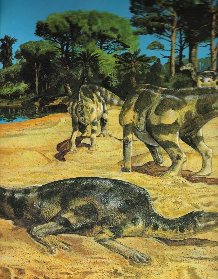Maiasaura by Steve Kirk