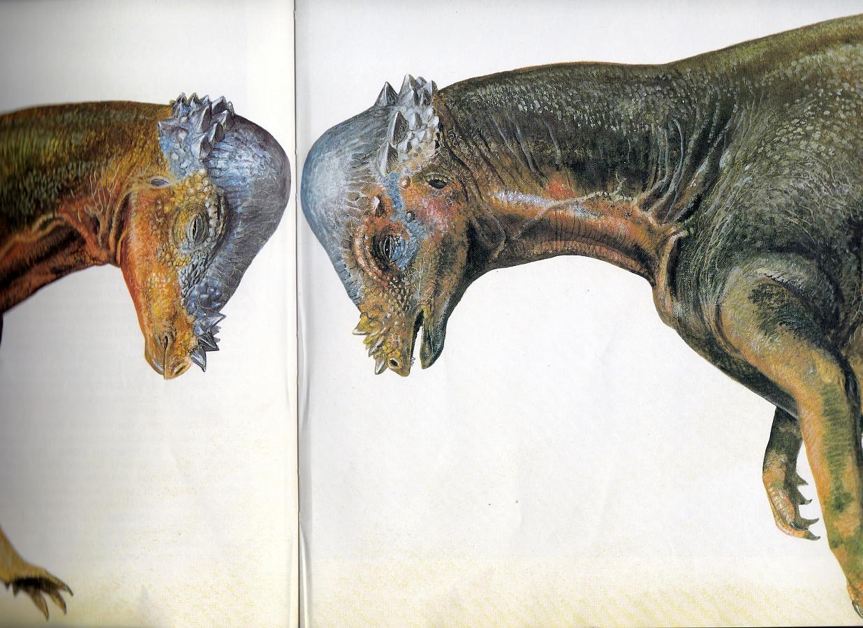 Pachycephalosaurus by Steve Kirk