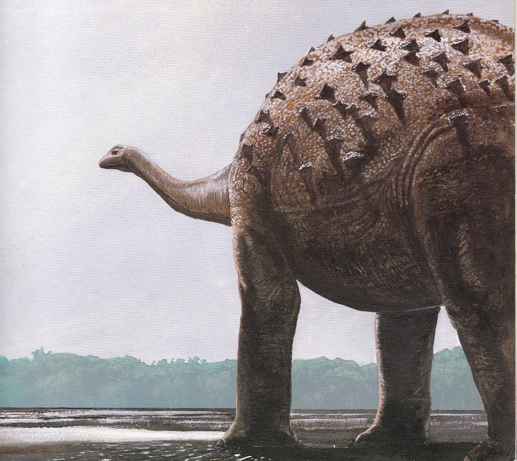 Saltasaurus by Steve Kirk