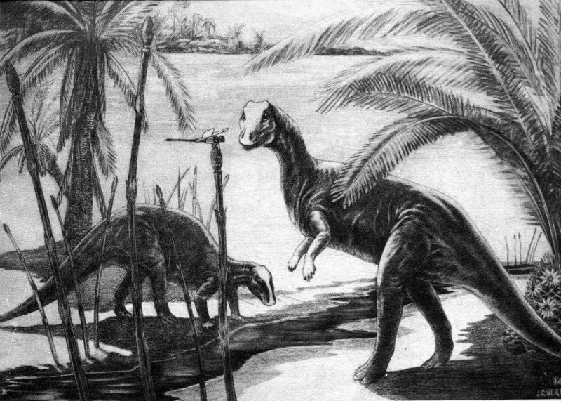 Camptosaurus black and white drawing