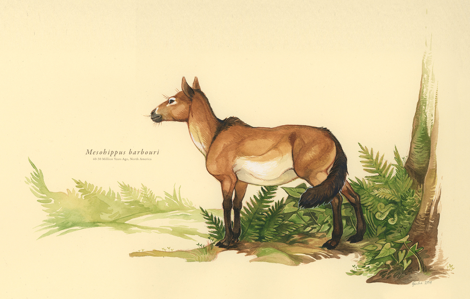 Artist rendering of Mesohippus by Mary Sanche.