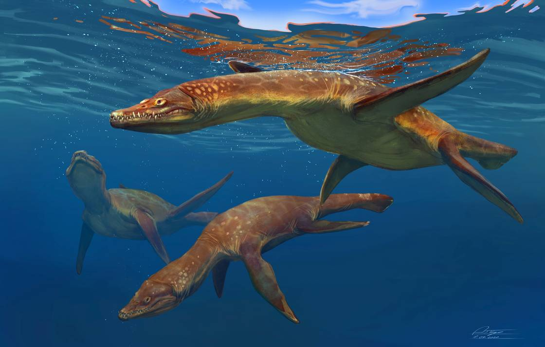Two Rhomaleosaurus swim in the ocean, illustrated by Anthony James Hutchings.