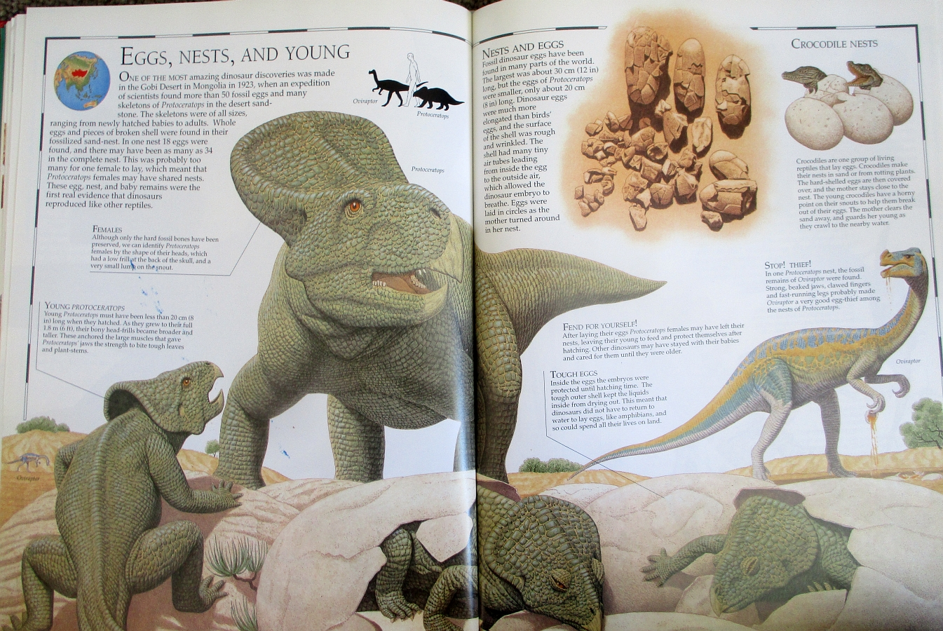 Protoceratops - Great Dinosaur Atlas