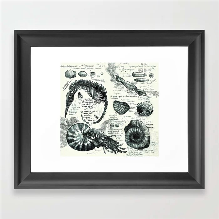 Fossil sketchbook framed print featuring marine fossil illustrations by Marni Walker