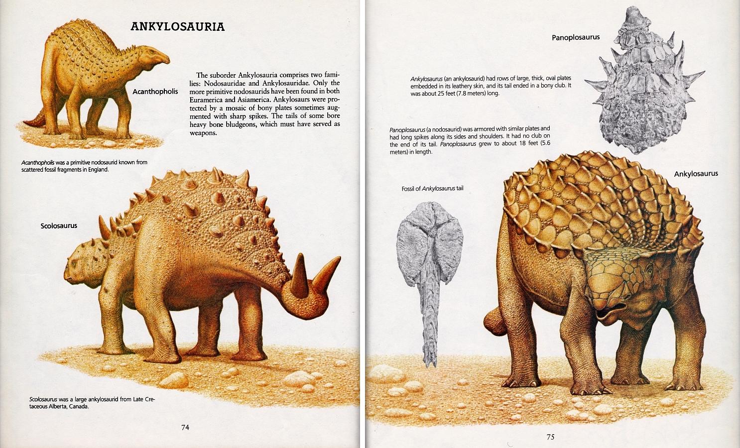 Acanthopolis, Scolosaurus, Ankylosaurus by Peter Zallinger