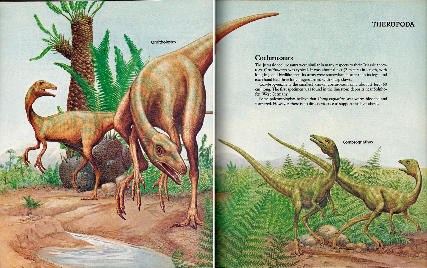 Ornitholestes and Compsognathus by Peter Zallinger