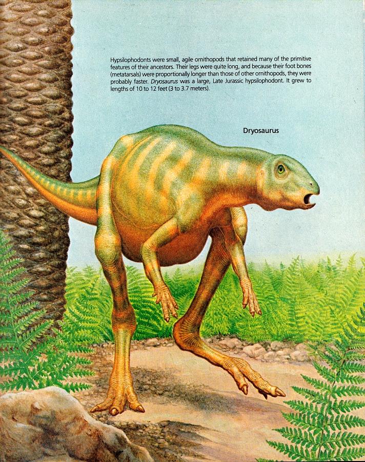 Dryosaurus by Peter Zallinger