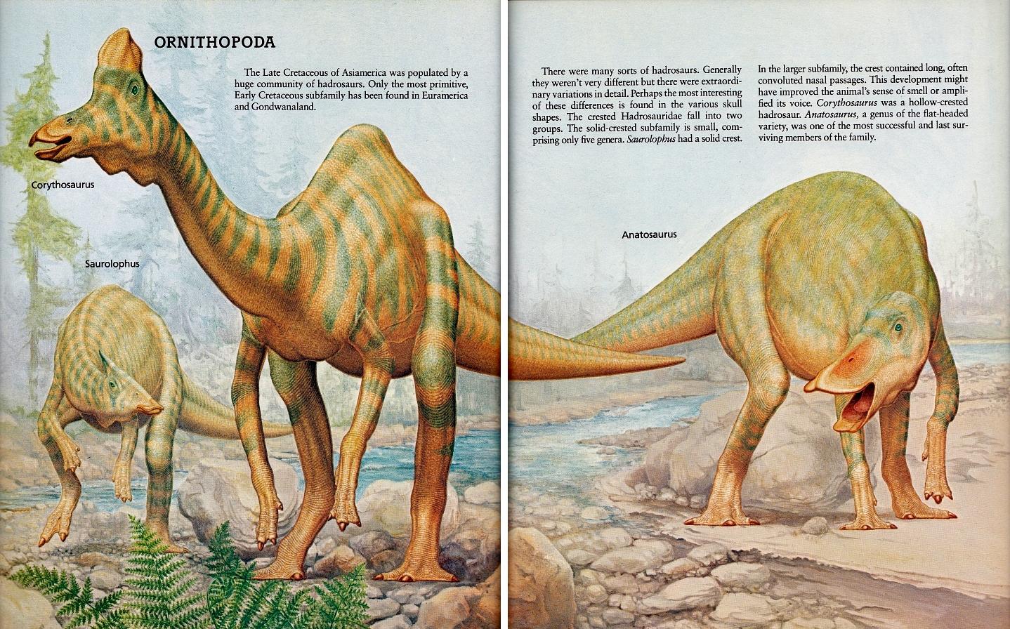 Saurolophus, Corythosaurus, Anatosaurus by Peter Zallinger