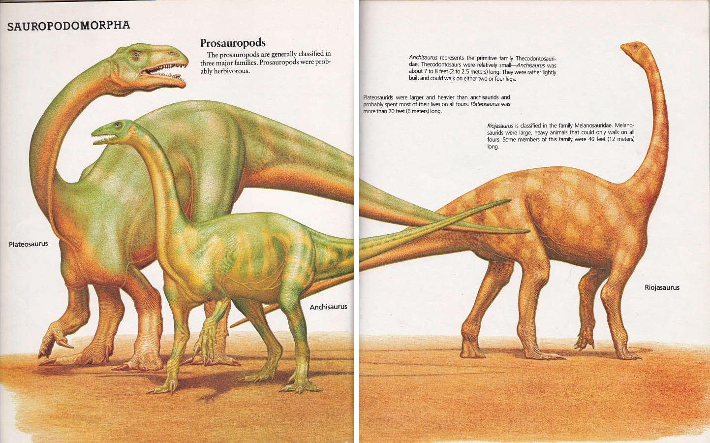 Prosauropods by Peter Zallinger