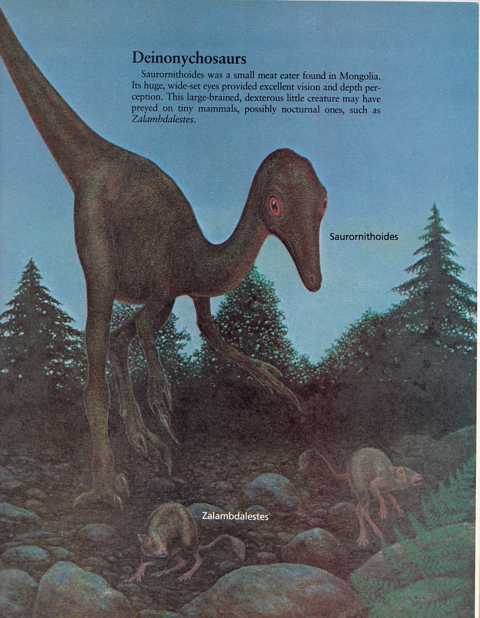 Saurornithoides by Peter Zallinger