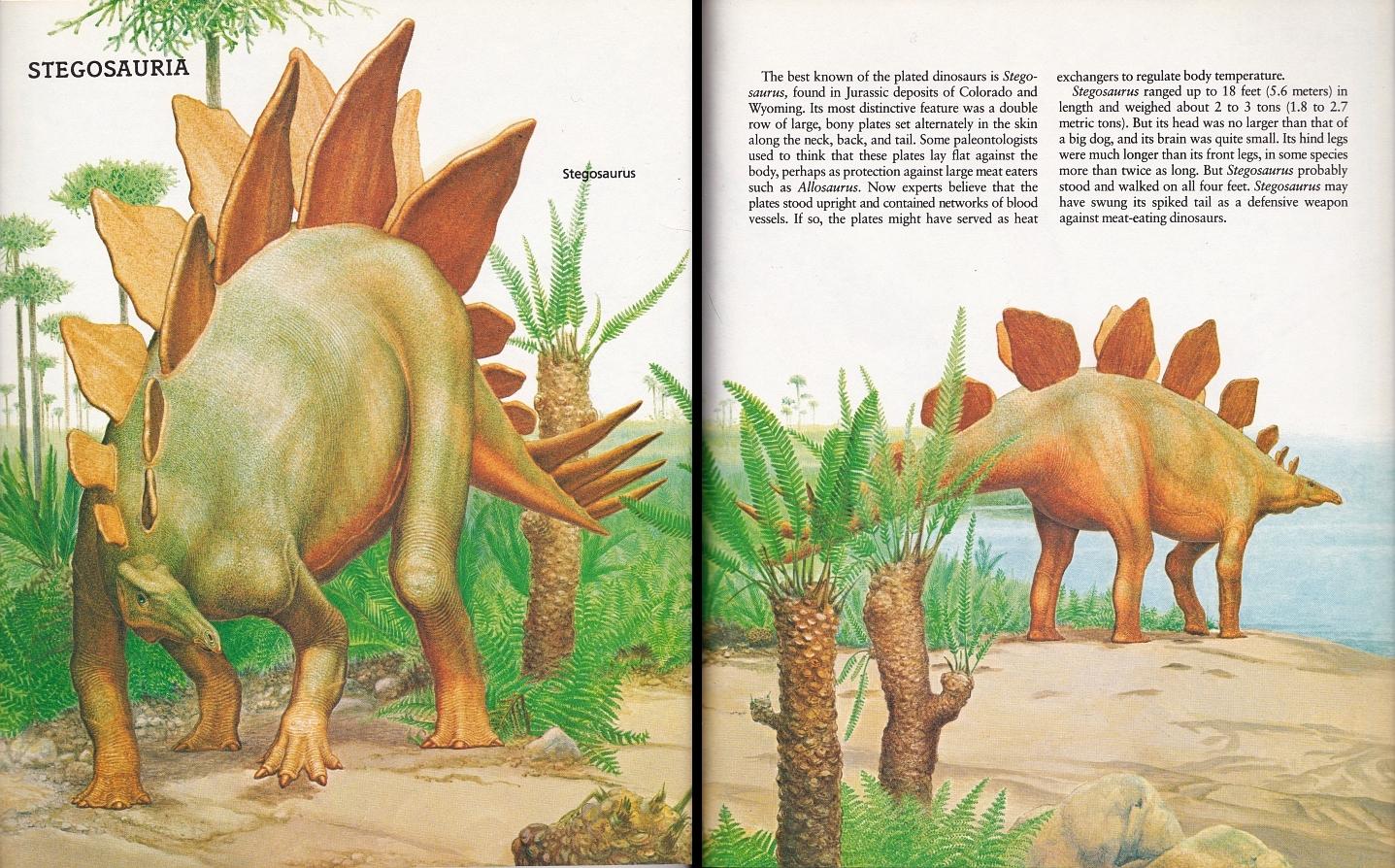 Stegosaurus by Peter Zallinger