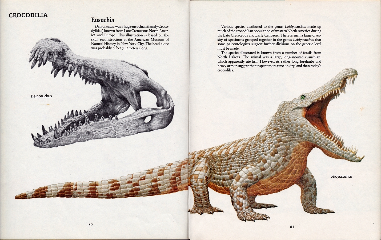 Leidyosuchus by Peter Zallinger