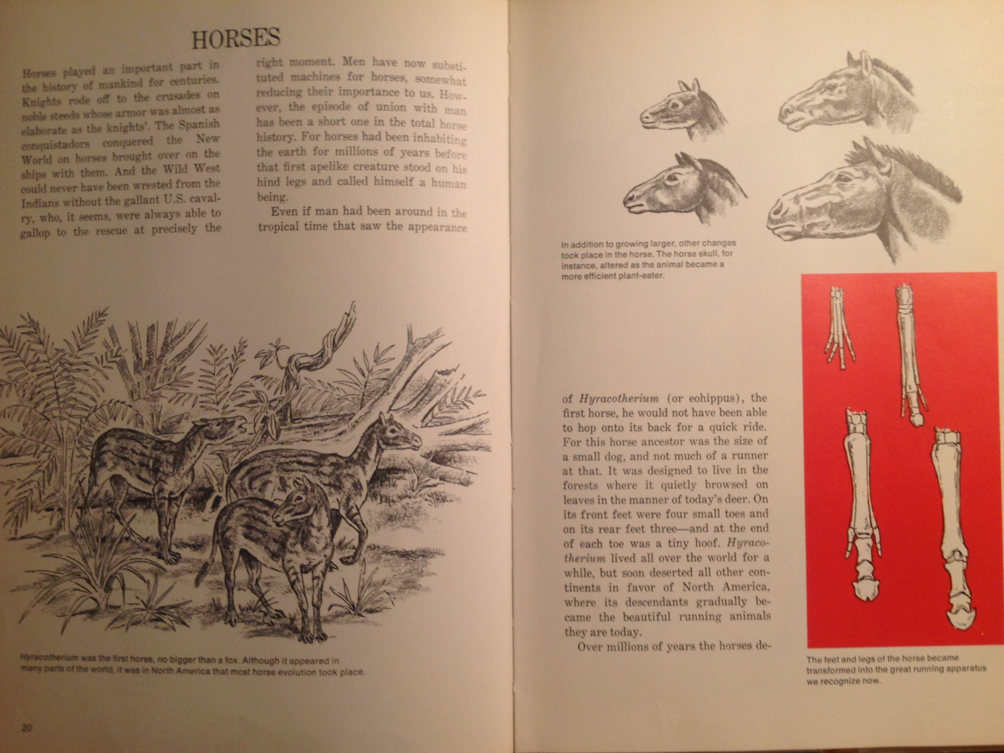 "A spread from ""Then and Now"" of horses and their fossils."