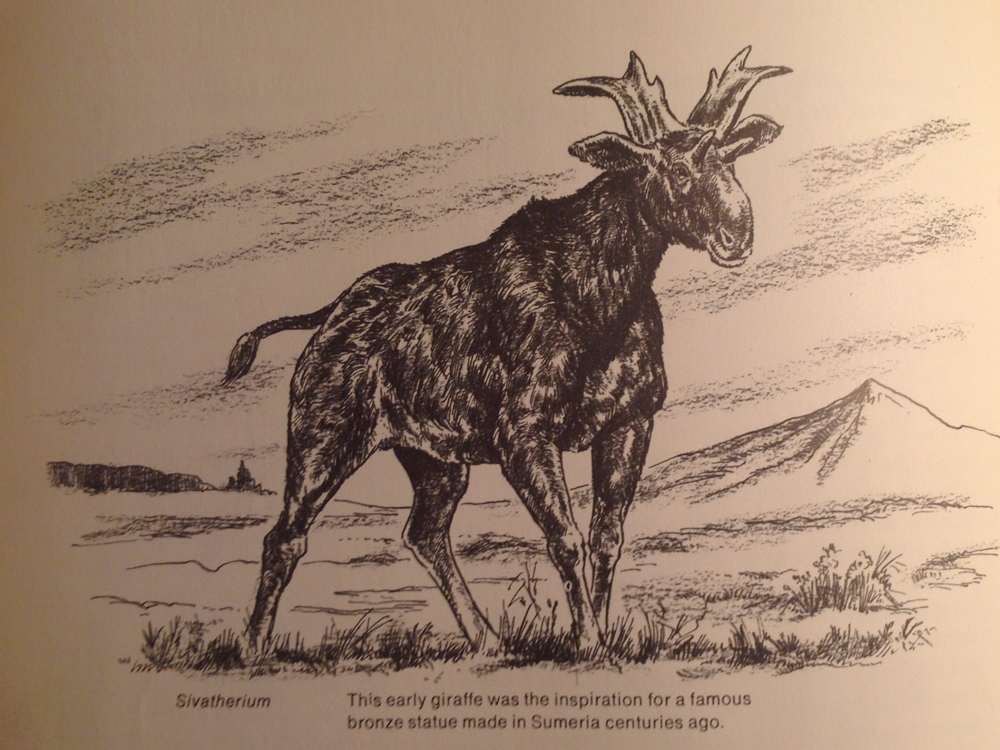 "An illustrated Sivatherium from ""Then and Now"""