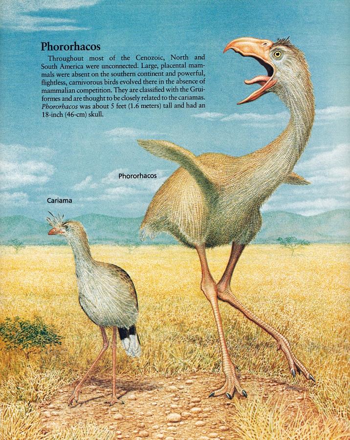 Phorusrhacos by Peter Zallinger