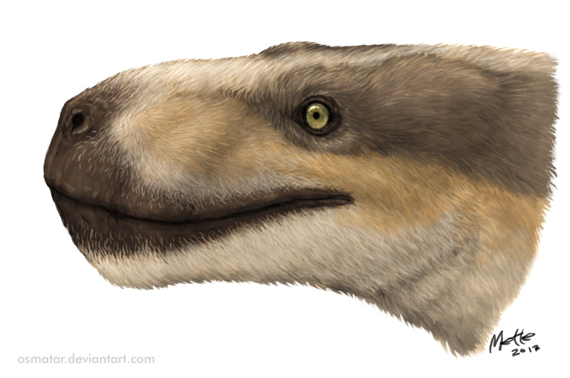 Lycaenops angusticeps illustrated portrait by Mette Aumala