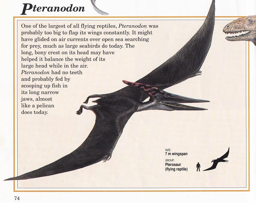Pteranodon by Steve Kirk