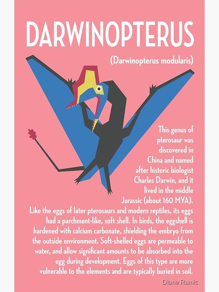 Darwinopterus illustrated infographic poster