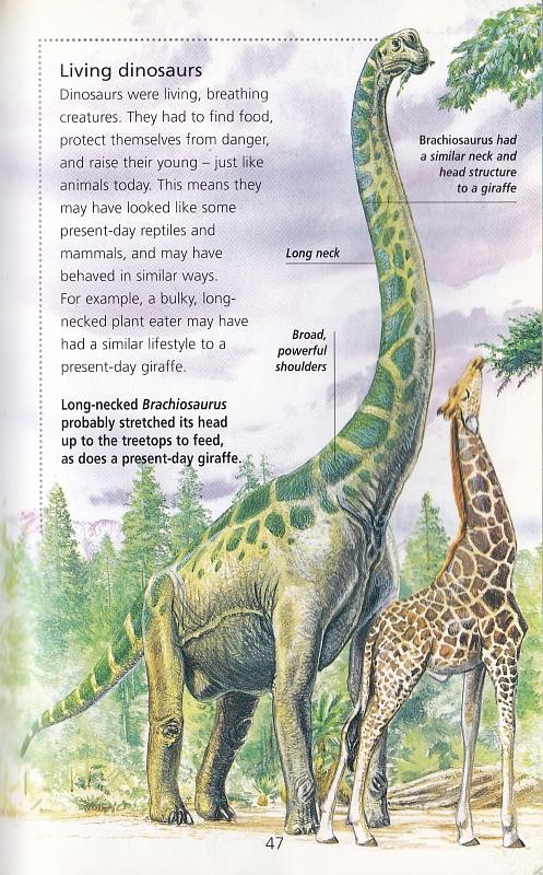 Brachiosaurus by Steve Kirk