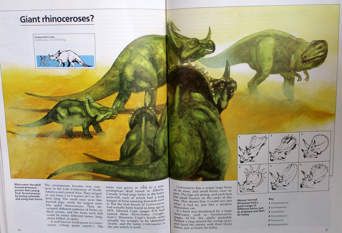 Giant rhinoceroses?