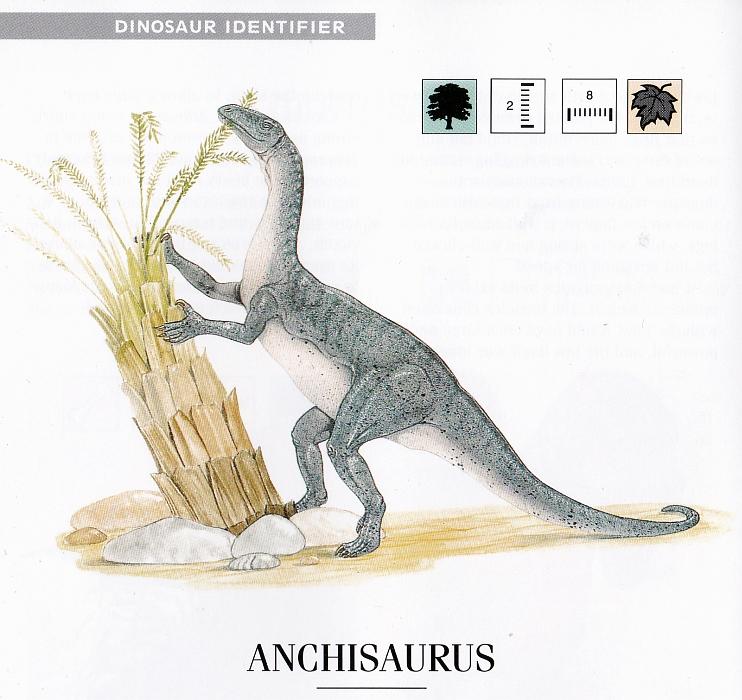 Anchisaurus by Graham Rosewarne