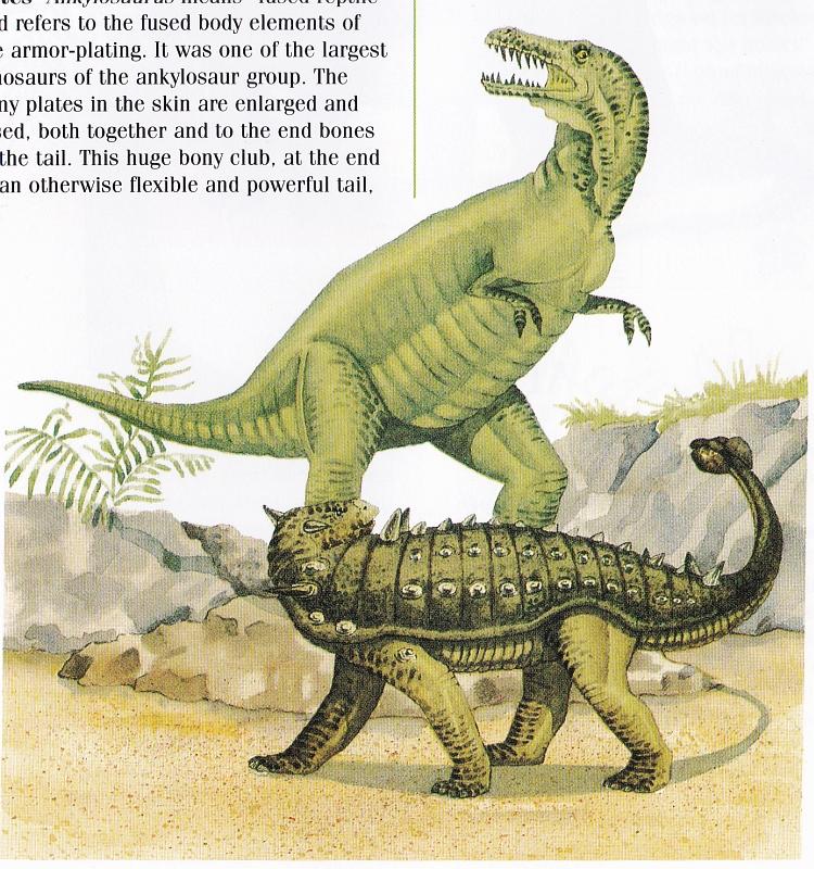 Ankylosaurus by Elizabeth Sawyer
