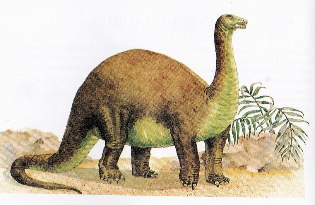 Apatosaurus by Elizabeth Sawyer
