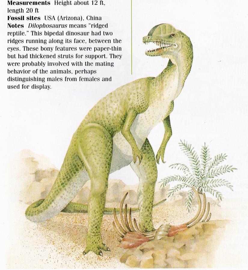 Dilophosaurus by Elizabeth Sawyer